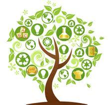 money tree product